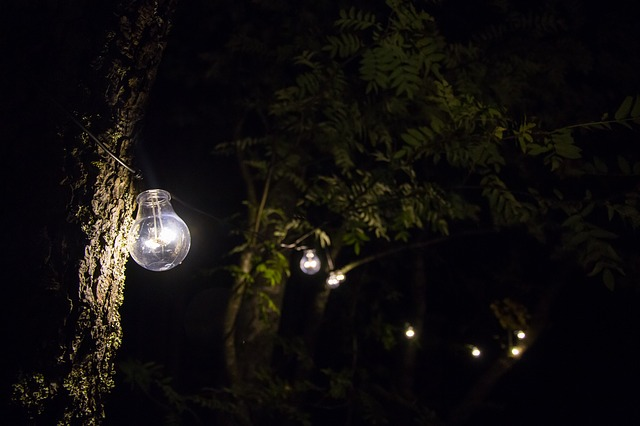 Žiarovky visiace na stromoch